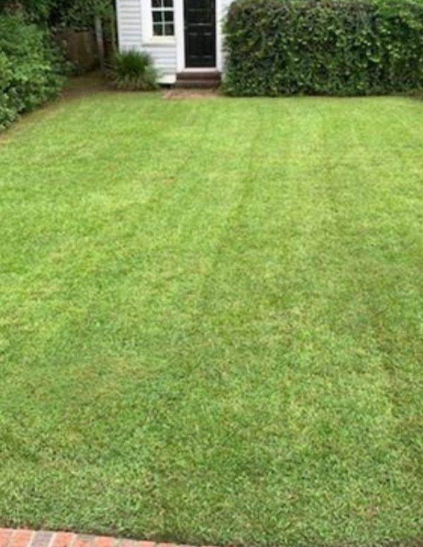 Lawn Care Florence SC - Mow